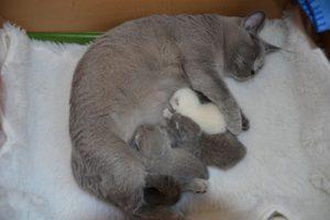 kittensdjoy2012