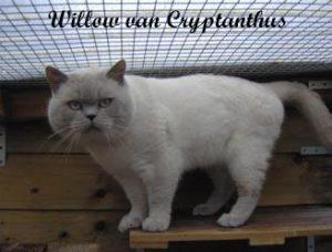 eur.-ch.-willow-van-cryptanthus