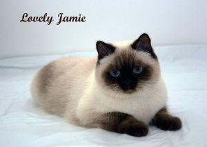 Lovely Jamie